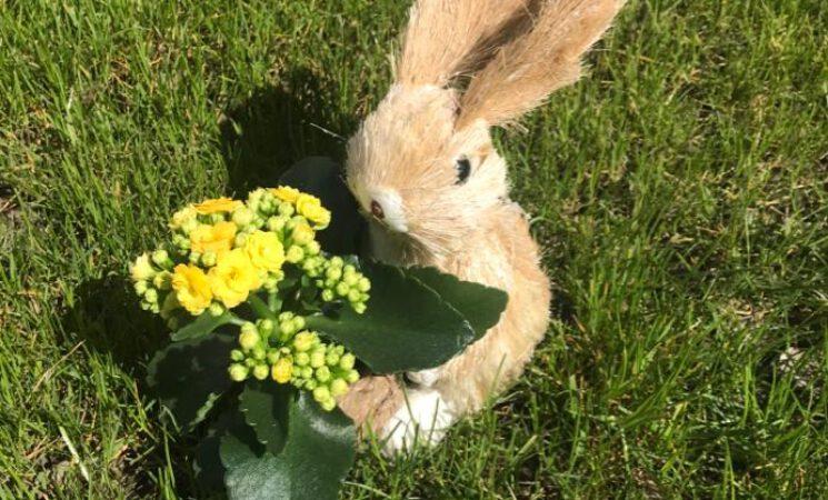 Wir wünschen allen ein frohes Osterfest